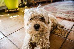 #dogoftheday #doglover #ilovemydog #petstagram #pets #puppylove #puppies #犬 #puppiesofinstagram #petsofinstagram #dogs_of_instagram #animal #pup #instapuppy #animals #doggy #instapet #chihuahua #adorable #dogsofig #doglife #frenchbulldog #doglovers #instagramdogs #weeklyfluff #멍스타그램 #lovedogs #bulldog #bestwoof #dogsofinstaworld