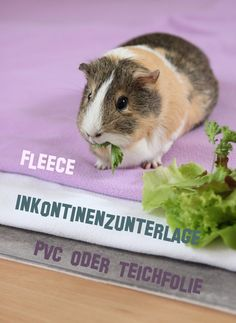 Wutz Doc - ein Meerschweinchen Blog: Enjoy the plushy side of life!