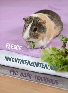 Wutz Doc - ein Meerschweinchen Blog: Enjoy the plushy side of life!