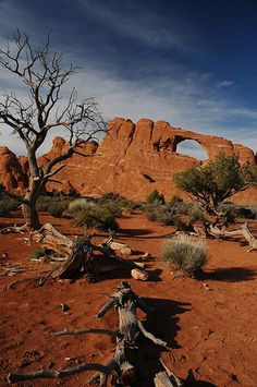 ~ Arches National Park ~ Moab, Utah....Love the Dead Wood laying around....