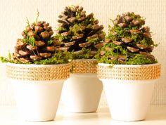 Leuke mini kerstboompjes. Terracotta potjes schilderen en beplakken met band (Action). Dennenappels met mos.