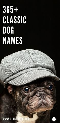 Classic dog names are super popular lately, and it's no surprise why. Find top, old-fashioned dog names like Douglas, Betty, Basil, Fido! #BestClassicDogNames #DogNames Cool Dog Names Girls, Popular Girl Dog Names, Cool Female Dog Names, Dog Names Unique, Best Dog Names, Puppy Names, Pet Names, Pet Dogs, Dogs And Puppies