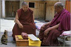 Chat assis à côté de 2 moines Tibétains