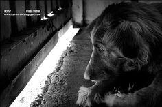 """fotografías en Blanco y negro de KARMA RIV / Raúl Vidal. """"Ese punto en que las sombras juegan a las escondidas con la luz..."""""""