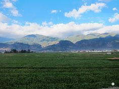 Lush green fields, blue skies and craggy mountains all around - Welcome to Dali, China!