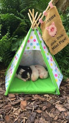 25 An adorable baby pig - meowlogy Cute Baby Pigs, Cute Piglets, Cute Babies, Cute Little Animals, Little Pigs, Pot Belly Pigs, Teacup Pigs, Baby Animals Pictures, Mini Pigs