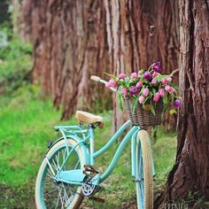 Imagine me on this bike...with the baskets full of flowers, my tripod in hand and my camera around my neck. Riding through our yard from one spot to the next chasing the sun for a couple photos. True story. It happened. And the neighbors are surely talking. #letthemtalk  But the first day of spring calls for work on that #Bicycle & #Blooms #photography series... What do you think?  And fun fact: this line of stately old growth trees midway through the acreage was one of my most favorite…