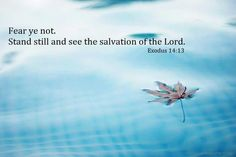 And Moses said unto the people, Fear ye not, stand still , and see the salvation of the LORD, which he will shew to you to day: for the Egyptians whom ye have seen to day, ye shall see them again no more for ever.~Exodus 14:13 (KJV)