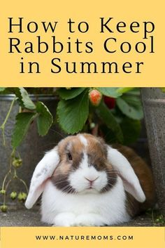 Keep Rabbits Cool Summer; Keep these temperature-sensitive animals cool and healthy with a few easy tips! Raising Rabbits For Meat, Meat Rabbits, Outdoor Rabbit Hutch, Indoor Rabbit, Flemish Giant Rabbit, Cat Care Tips, Pet Care, Pet Tips, Bunny Care Tips
