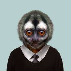 Gray-handed Night Monkey - Aotus Griseimembra