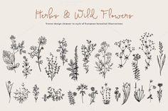 Tatto Ideas 2017  Herbs & Wild Flowers. Set