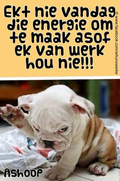 Funny Qoutes, Cute Quotes, Words Quotes, Funny Memes, Jokes, Good Morning Prayer, Good Morning Good Night, Messages For Friends, Afrikaanse Quotes