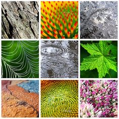 Nature Patterns And Textures Square Collage by Christina Rollo © www.rollosphotos.com. From top left to bottom right, tree bark, coneflower orange and red center, frost, dewy spider web against green background, rain drops on pond, green flowering raspberry leaf, colorful layers of slate rock, yellow sunflower center, pink and white stonecrop flower.  #colorful #nature #art