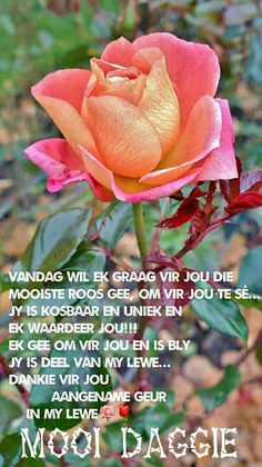 October in the rose garden Beautiful Roses, Beautiful Gardens, My Flower, Flower Power, Rose Reference, Ronsard Rose, Rose Bush, Love Rose, Pink Roses