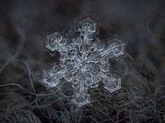 Amazing Macro-Photography of Individual Snowflakes Photographer Alexey Kljatov is able to take these fleeting moments of magnificence and turn them into lasting close-up photos Snowflake Photography, Macro Photography Tips, Micro Photography, Nature Photography, Fotografia Macro, Snowflake Pictures, Foto Macro, Point And Shoot Camera, 10 Picture