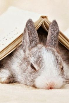 Image result for bored bunny