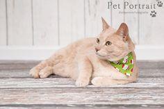 Kattenfotograaf Hillegom - Fotoshoot voor drie katten-12