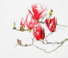 Magnolias-0
