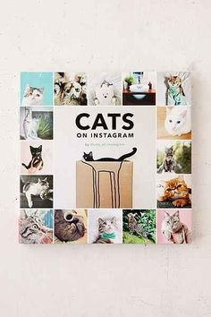 Cats On Instagram By @cats_of_instagram - Urban Outfitters