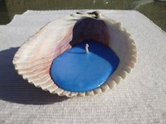 Seashell Candle Ocean Breeze scented Handmade by BlackWillowSoaps