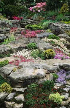 Alpine rock garden with low-growing ground cover and perennials