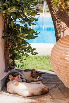 Cats on va-cay🌴 Animals And Pets, Baby Animals, Cute Animals, Kittens And Puppies, Cats And Kittens, Kitty Cats, Crazy Cat Lady, Crazy Cats, I Love Cats