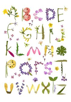 Herbarium Alphabet Flower Botanical Wall Art Poster - Pressed Flower…