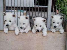 紀州犬ファイル23090901