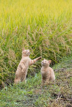 "land-like-a-cat: "" Cat in farm land by kat-taka on Flickr. """