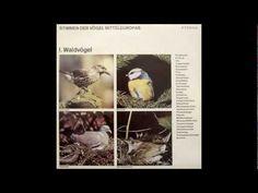 Stimmen der Vögel Mitteleuropas - I. Waldvögel - YouTube