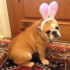 Happy Easter everyone! Love, Molly