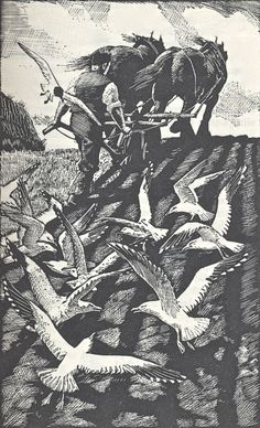 Seagulls and Plough, wood engraving by C.F.Tunnicliffe
