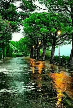 #rainyday  #dreamy