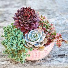 💗 Propagating Succulents, Growing Succulents, Succulents In Containers, Cacti And Succulents, Planting Succulents, Cactus Plants, Planting Flowers, Succulent Bowls, Succulent Arrangements