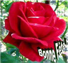 """Le prénom Rosalie est apparenté au terme latin rosalis qui signifie """"qui concerne les roses"""". Le terme latin Rosalia désignait durant l'Antiquité romaine une cérémonie au cours de laquelle on parsemait des roses et suspendait des guirlandes dans les cimetières. Sainte Rosalie, Vierge à Palerme, en Sicile (✝ 1170) --- Rosalie, Robert Schuman, Sainte Catherine, Flowers, Culture, Happy Name Day, Royal Icing Flowers, Flower, Florals"""