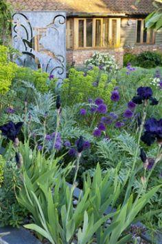 Two Gardens In One - Sue Townsend Garden Design Purple Garden, Flowers Garden, Iris Garden, Garden Path, Terrace Garden, Easy Garden, Water Garden, Amazing Gardens, Beautiful Gardens