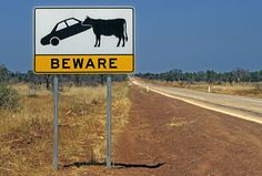 Cows eat cars! Only in Australia.