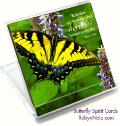 """Butterflies are reminders that miracles happen every day."" -Robyn Nola"
