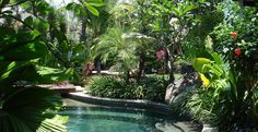 sub tropical garden design ideas - Google Search