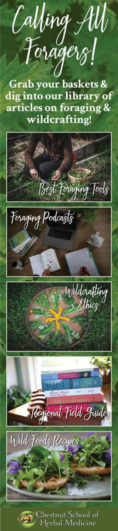 Our Online Foraging Hub is packed with resources, recipes, and sustainable foraging tips.  #foraging #wildfood #wildfoods #fallforaging #winterforaging #springforaging #herbalist #herbs #herbalism #herbalife #foragingtools #wildcrafting