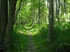 Hiking on the Appalachian Trail, Shenandoah National Park, Virginia