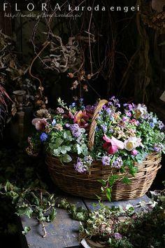 春のバスケット寄せ植え | フローラのガーデニング・園芸作業日記