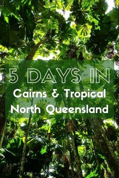 Five days in Cairns and Tropical North Queensland is just long enough to give you a taste of the amazing things this region has to offer. Explore the Great Barrier Reef, Daintree Rainforest, ancient Indigenous culture and a thriving city scene all on this whirlwind itinerary. Australia Tourism, Environment, World Heritage Sites, National Parks, Tasmania, Island, Nature, Block Island, The Great Outdoors