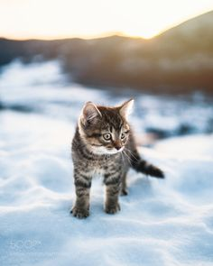 kohalmitamas:Cat meow side how bowdah? by oscarwastaken