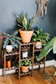 Wanderer Nashville Live/Work Space Tour a Nashville home full of plant life.Tour a Nashville home full of plant life. Hanging Plants, Indoor Plants, Hanging Wire, Indoor Gardening, Ideas Terraza, Plantas Indoor, Deco Nature, Diy Plant Stand, Indoor Plant Stands