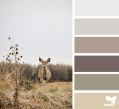creature color | design seeds | Bloglovin'