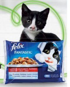 Felix Macskaeledel Lunch Box, Cats, Animals, Gatos, Animales, Animaux, Bento Box, Animal, Cat