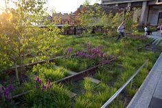 High Line, Piet Oudolf, landsape design, landscape architecture, reclaimed