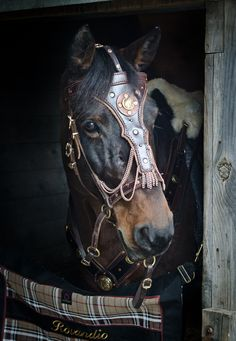 Rovandio's special bridle for the film Falcyyr. Made by El Sueno Espanol. Sandra Beaulieu was a stunt double on Rovandio, an Andalusian/Lipizzan gelding.