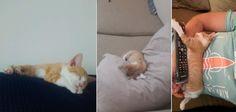 Hi reddit meet Suki Gatinho we rescued her 1 year ago (kitten old photos inside) http://ift.tt/2wCymRm